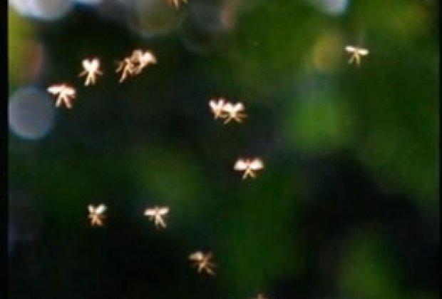 Engleska: Univerzitetski profesor snimio vile, sićušna krilata bića! – VIDEO