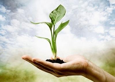 Biljke posjeduju sva osjetila kao i ljudi