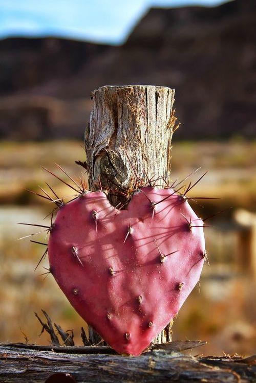 I dok se Ljubav bori za život..(nježnost u meni daje joj snagu)