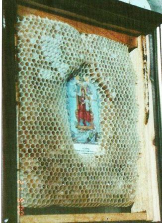 I pčele poštuju ikone