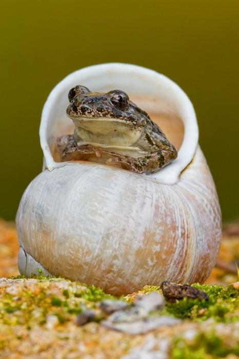 Priča o žabi napuhanki i odmetnutom princu