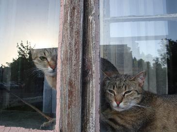 U prozoru