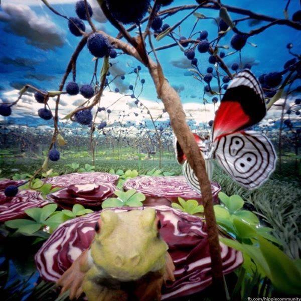 Žabe, leptiri, kupus i psihodelija darovanih trenutaka