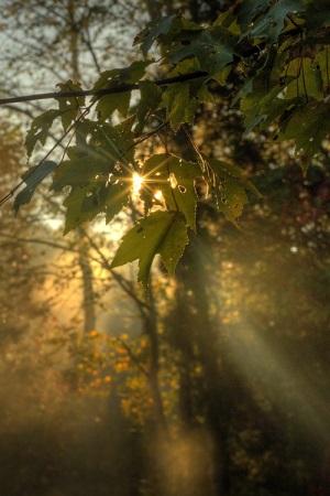 Dobro jutro, ljekovita tišino...