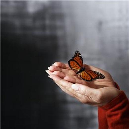 Priča o gusjenici, i leptiru zatočenom u košuljici