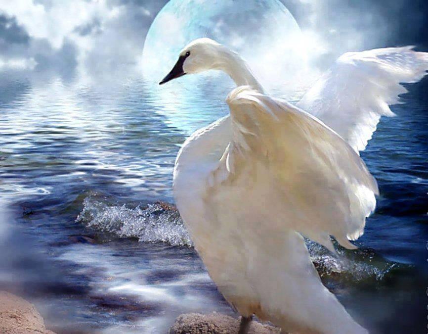 Dva su labuda noćas