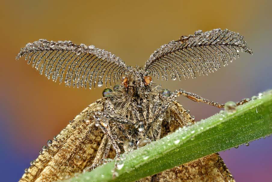 Razlika između leptira i muhe