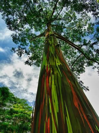 Šesnaest veličanstvenih svjetskih stabala