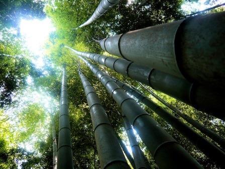 Drvo donosi prosperitet