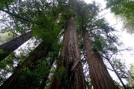 Tri stabla