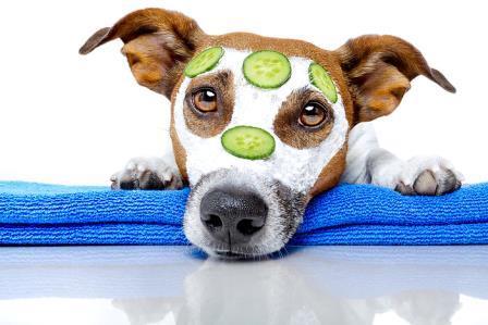 Iscjeljivanje i komuniciranje sa životinjama