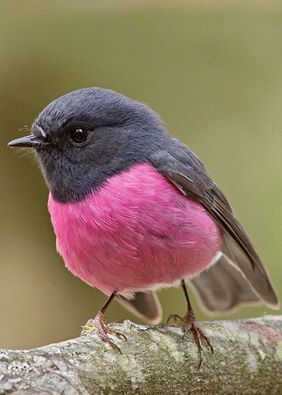 I ptica svakog ljeta novo gnijezdo savija