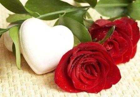 IMAM DVIJE RUŽE