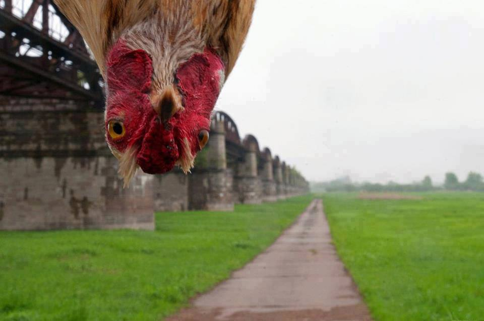 Nešto mi opet kokoškice na pameti..