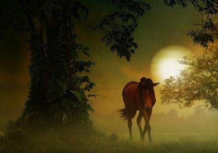 Božidar Prosenjak: Divlji konj