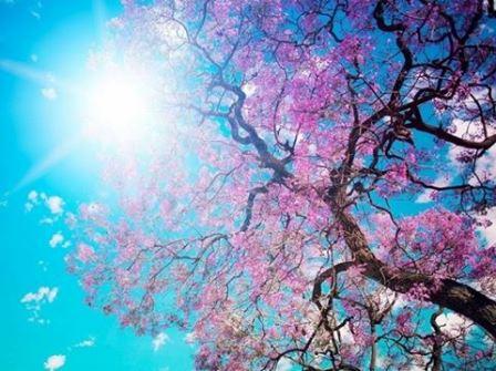 Proljetna slikovnica
