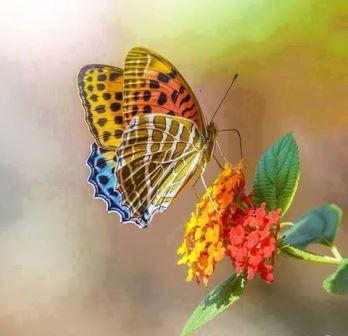 Leptir i cvijet