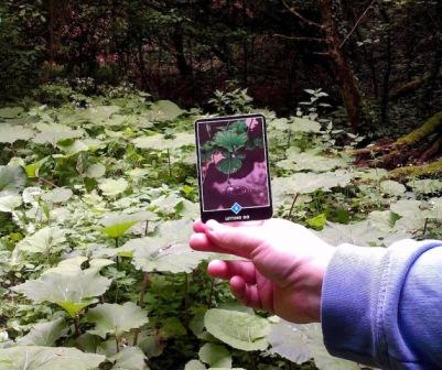 Individualni tečaj Osho Zen Tarota putem videoveze