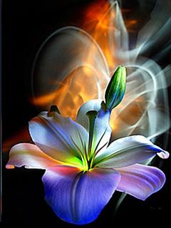 Ljubav je više nalik mirisu nego cvetu (4. 3.)