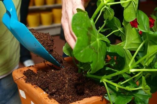 Ove kućne biljke čiste zrak  od plijesni i otrova za samo 6 sati