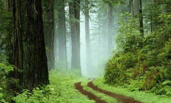 Uče vas da potiskujete prirodu (4. 2.)