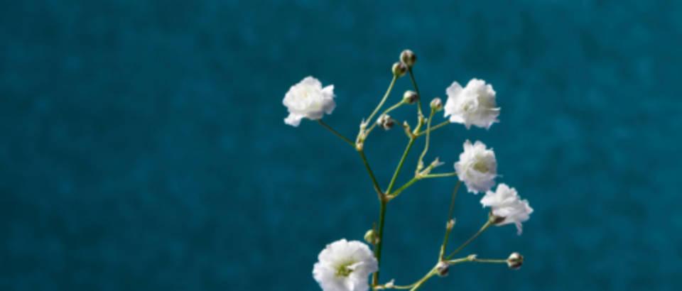Sićušan cvijet pojačava učinkovitost lijekova protiv raka