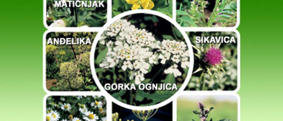 Snagom devet biljaka protiv probavnih tegoba