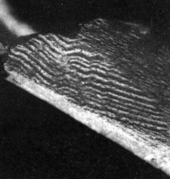 Kako djeluje paleomagnetsko datiranje
