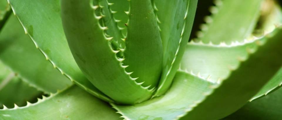 Biljke koje liječe