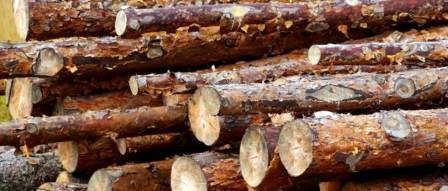 Ekstrakt kore bora poništava oštećenje bubrega