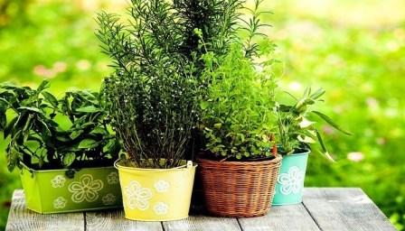 3 biljke koje stvaraju POZITIVNU ENERGIJU u vašem domu. Nabavite ih ODMAH!