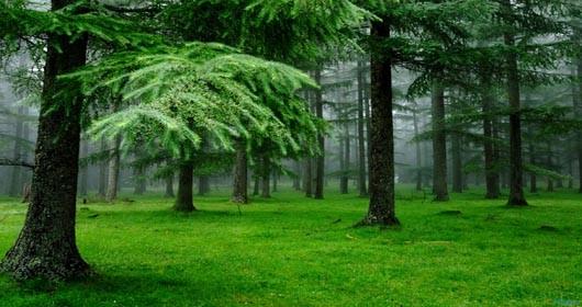 Delovanje drveća na zdravlje