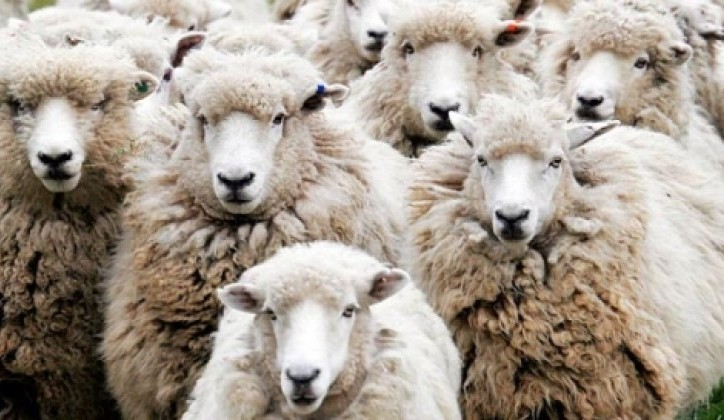 Efekt stada: Manipulacija masama je vrlo jednostavan posao!