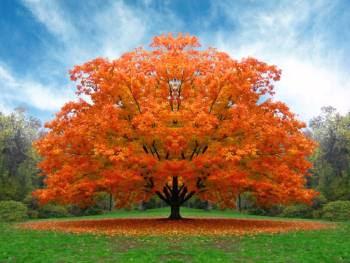 Zrnce znanja 14 - Drva ili drveta?