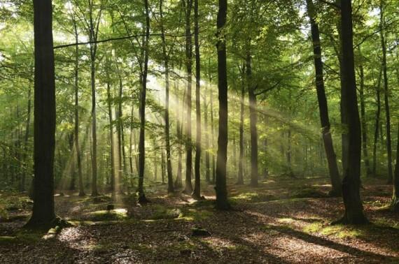 BOŽJA PRAVDA NIKOGA NE ZAOBILAZI: Poučna priča o tome da sve u životu ima svoju svrhu