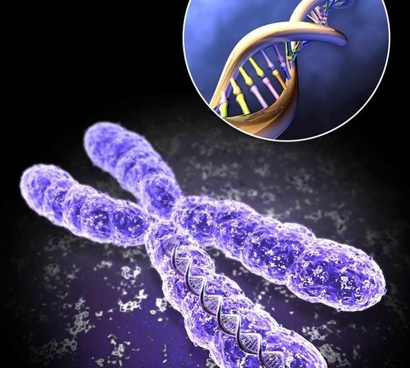 Torziona polja - uticaj riječi na DNK čovjeka