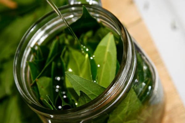 Znate li šta dobijete kada lovorov list prelijete maslinovim uljem i zagrijete na vatri? Iznenadit će vas!