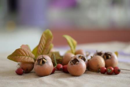 Mušmula, divlji lijek