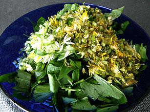 Salata od maslačka i divljeg luka