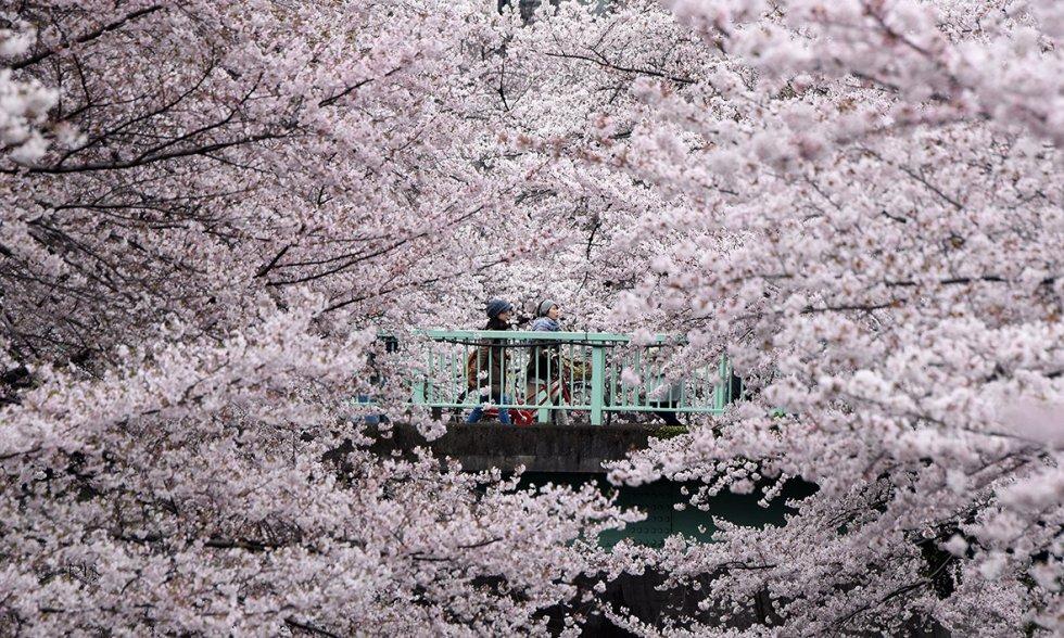 Volim proljeće...