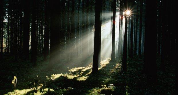 Duhovi Drveća