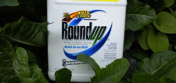 Kalifornija: Monsantov Glifosat uzrokuje rak! Tužite EU i hrvatske zastupnike!