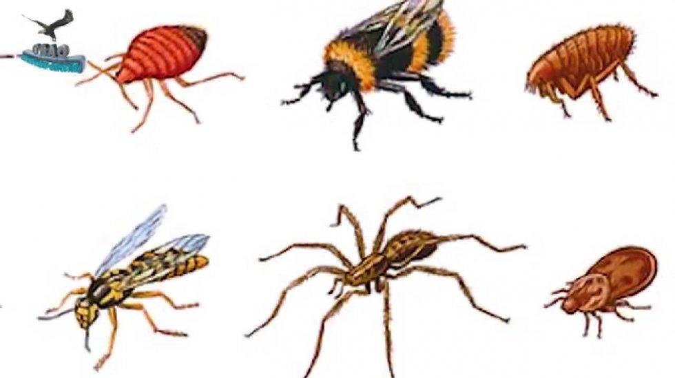 Protiv neugodnih uboda insekata