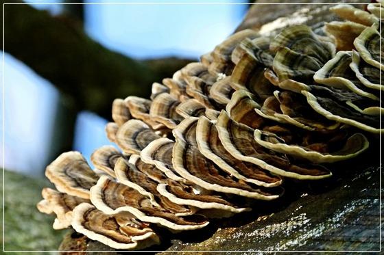povjerenstva niču k'o gljive poslije kiše