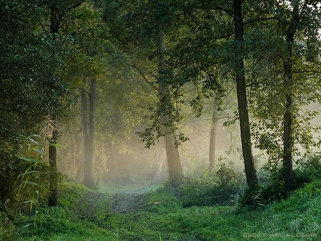 Šume i drveće u starih naroda – mitovi i stvarnost