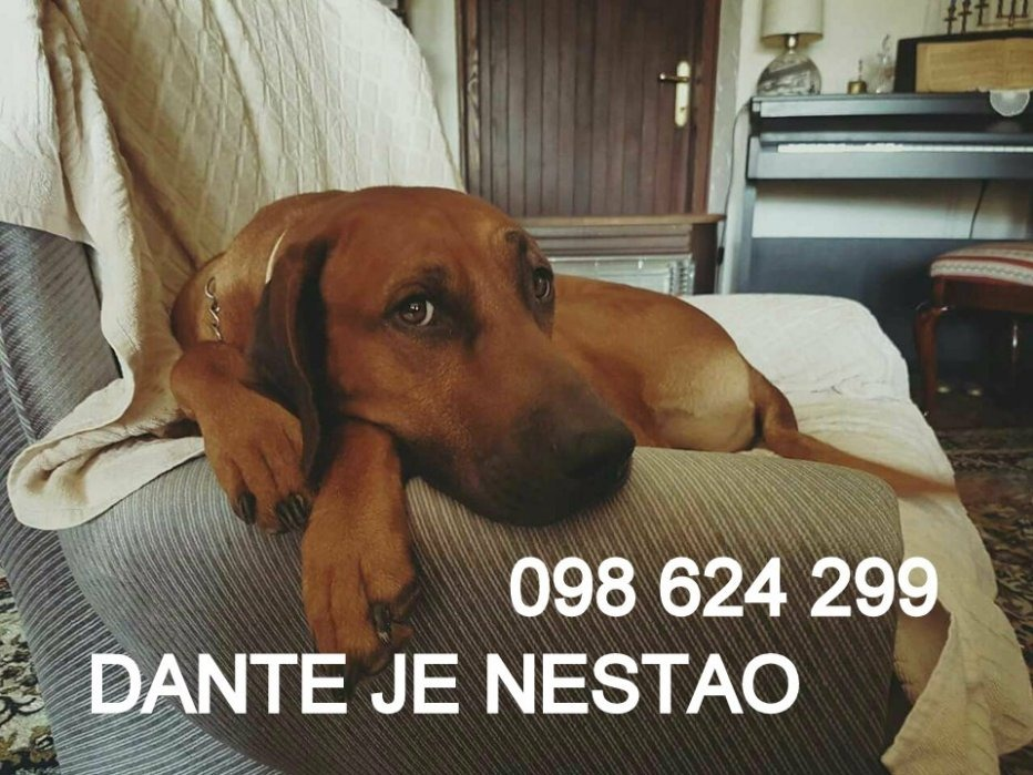 DANTE, RIDBACK, NESTAO ... ZVATI 098 624 299