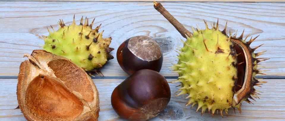 Kesten - zdrava poslastica jeseni