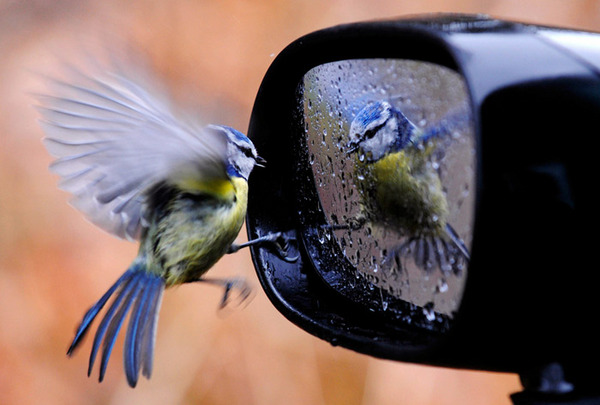 Ogledalo duše