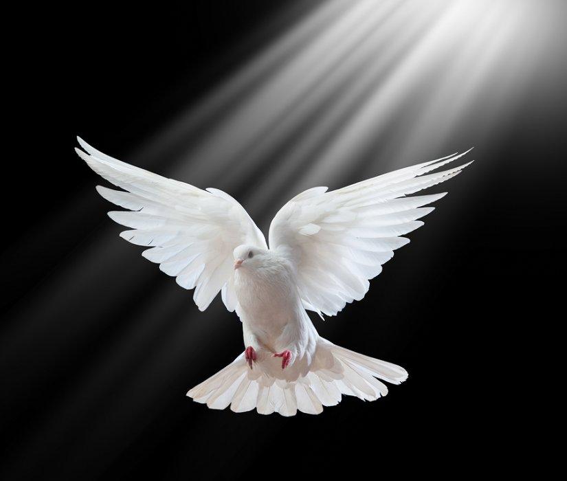 Sveti Duh - sila koja je potrebna i vama; Kako znamo da Sveti duh nije osoba?