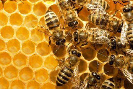 Pčelinji proizvodi - liijek iz prirode